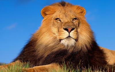 《P001.攻城狮宣言》 明确`攻城狮`的新寓意,创建单词`moilion`和`攻城狮节`,展示`moilion`的推导过程,表述`攻城狮`的职责及使命。