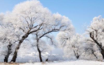 《020.冷却大法,发芽定律》 冷却大法,发芽定律,指当自己获得一个冲动时,先冷静,不作为,就像种下一颗种子,等它发芽。